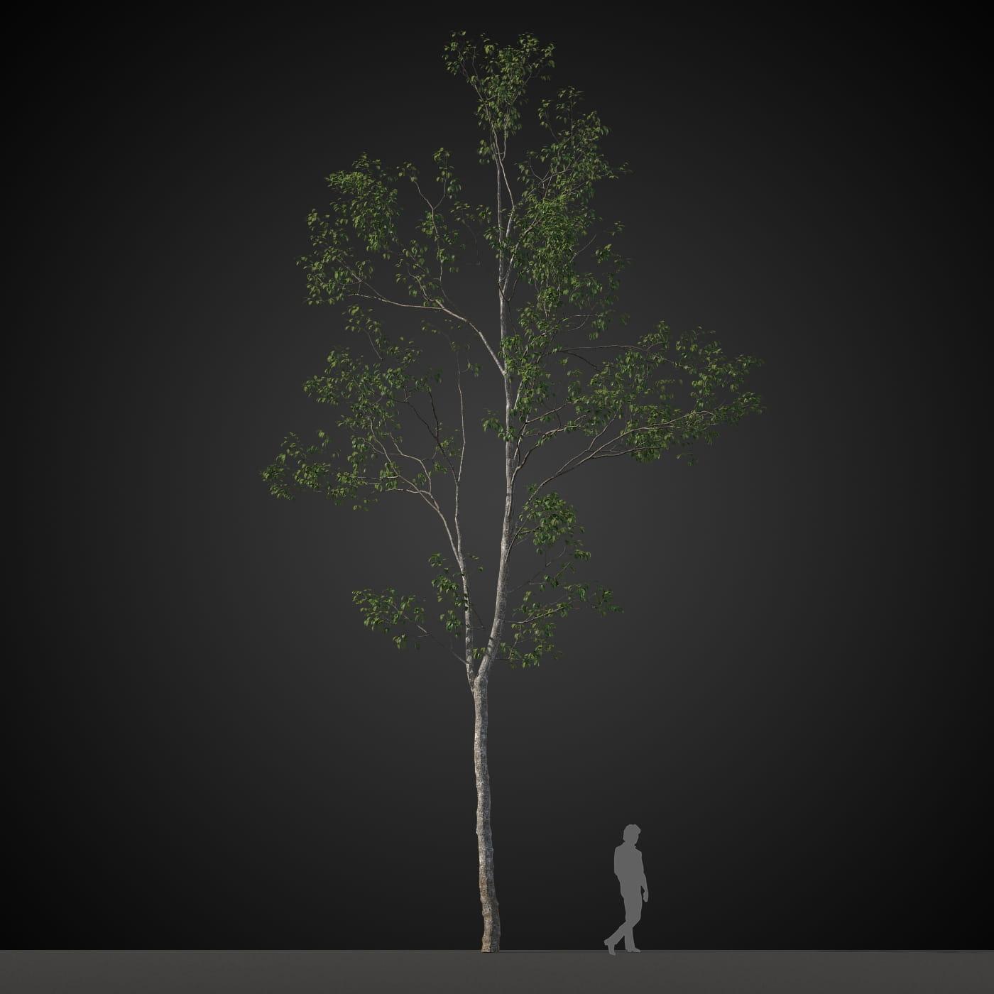 tree 17 AM207 Archmodels