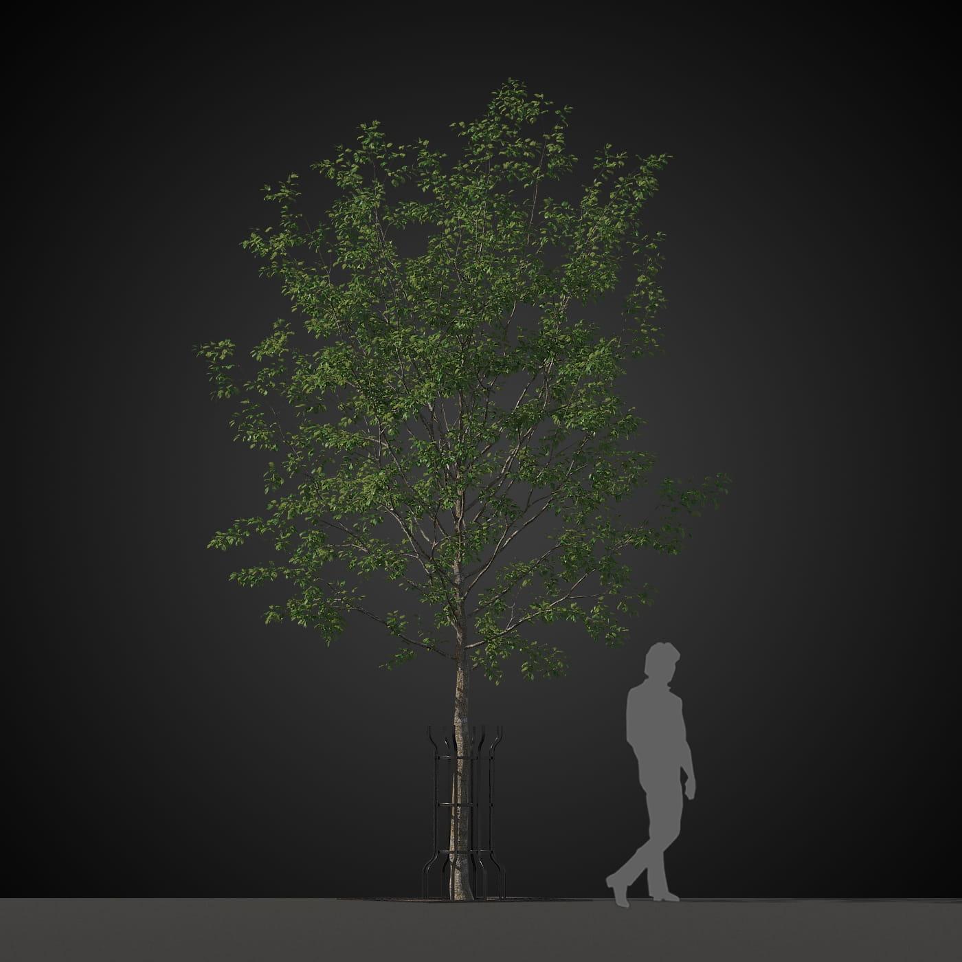 tree 21 AM207 Archmodels