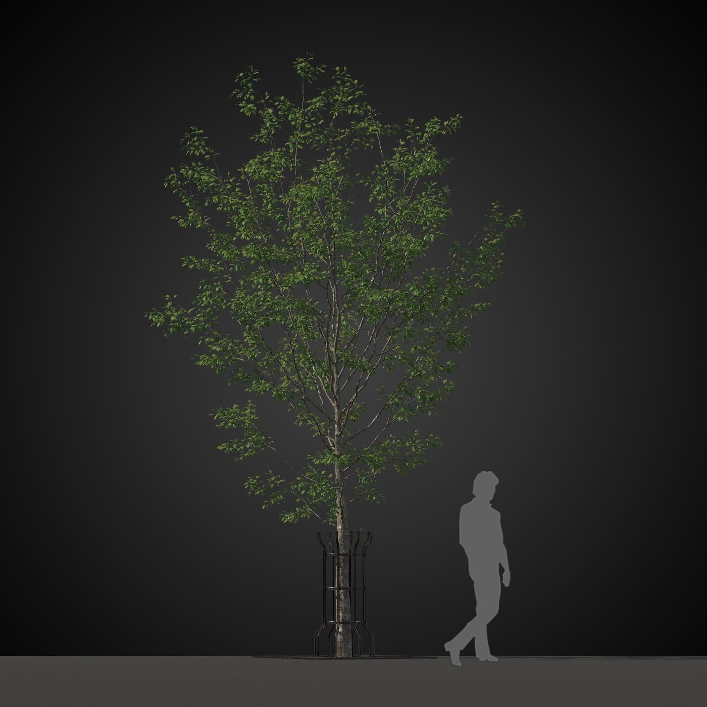 tree 22 AM207 Archmodels