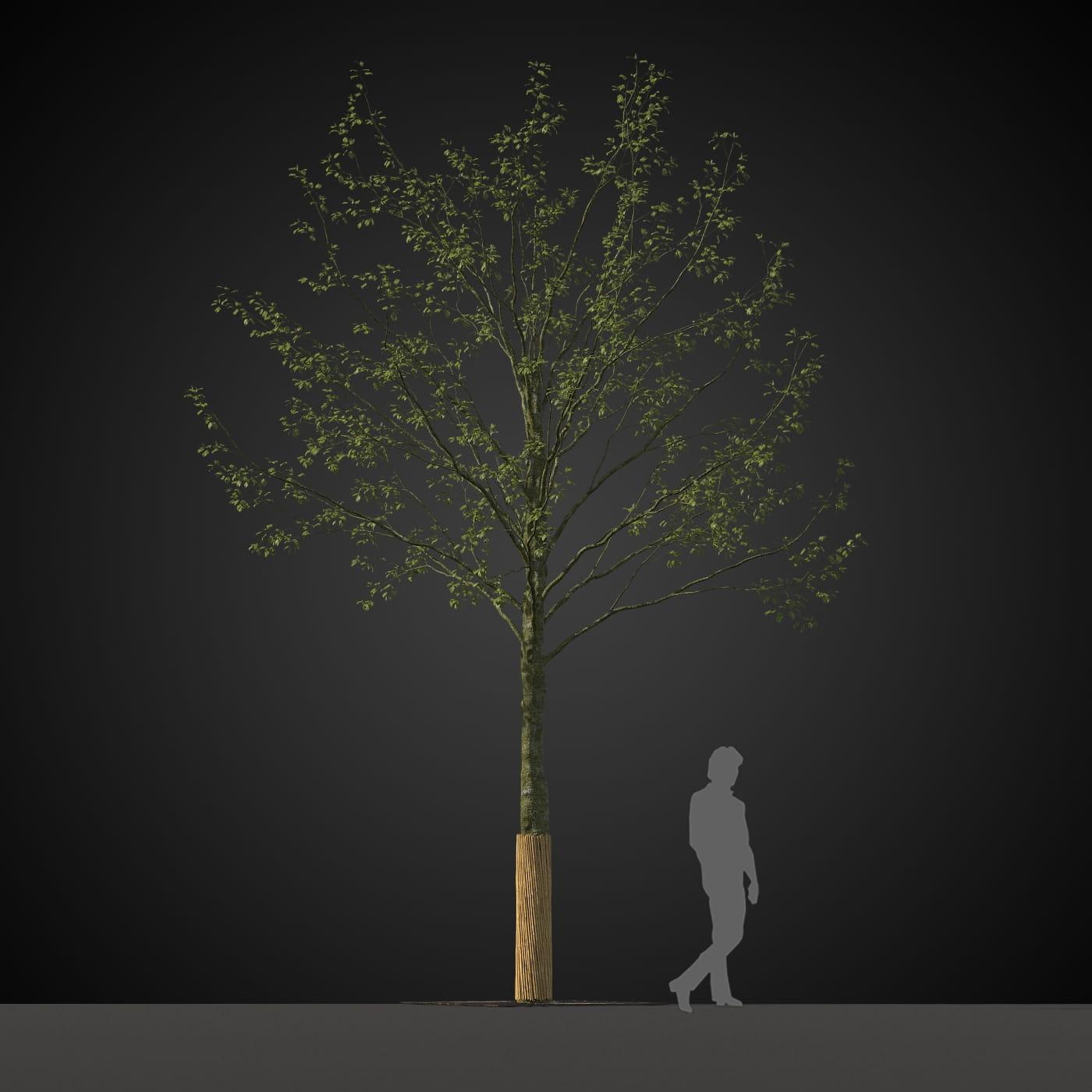 tree 23 AM207 Archmodels