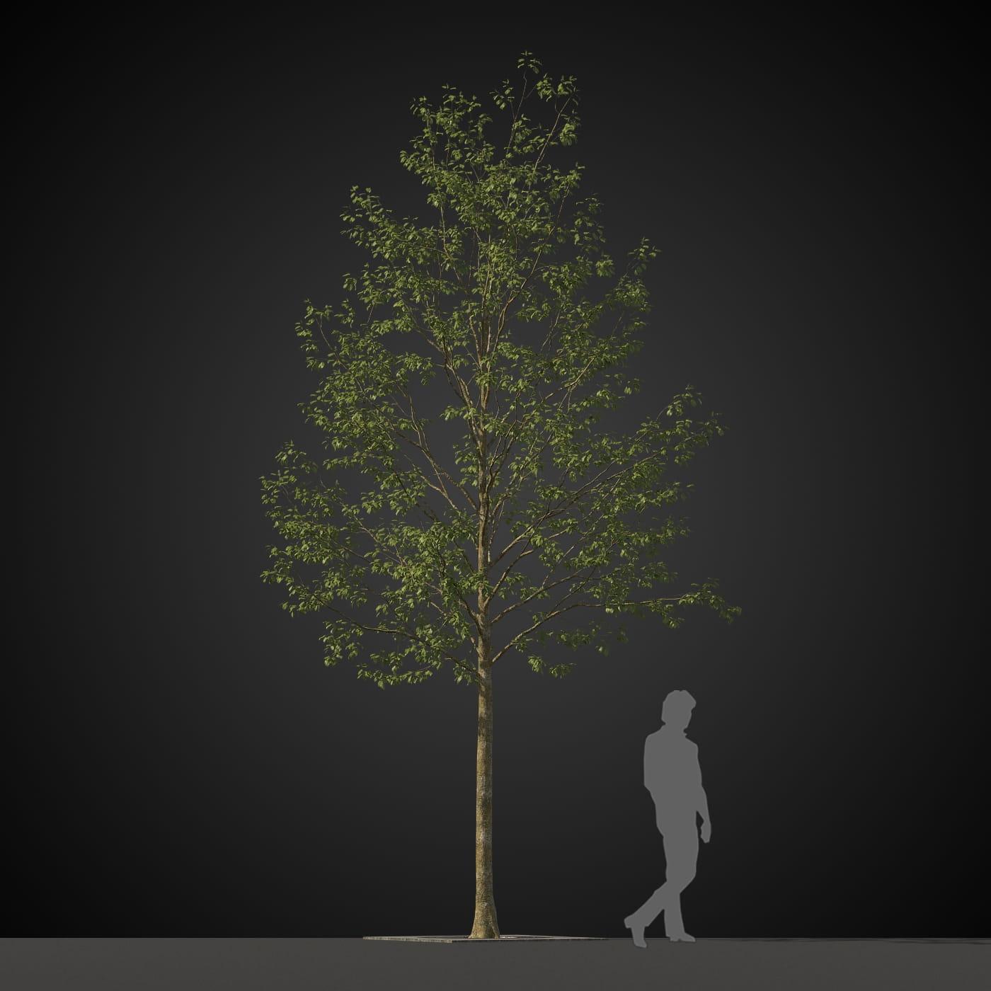 tree 25 AM207 Archmodels