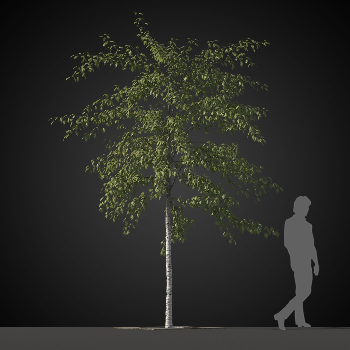 tree 31 AM207 Archmodels
