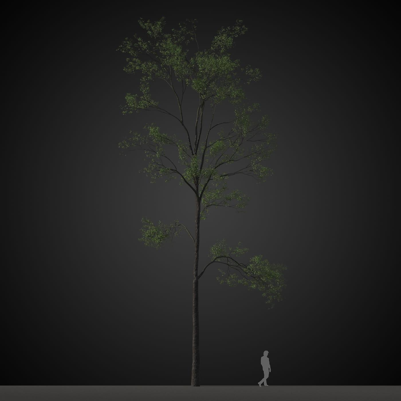 tree 32 AM207 Archmodels