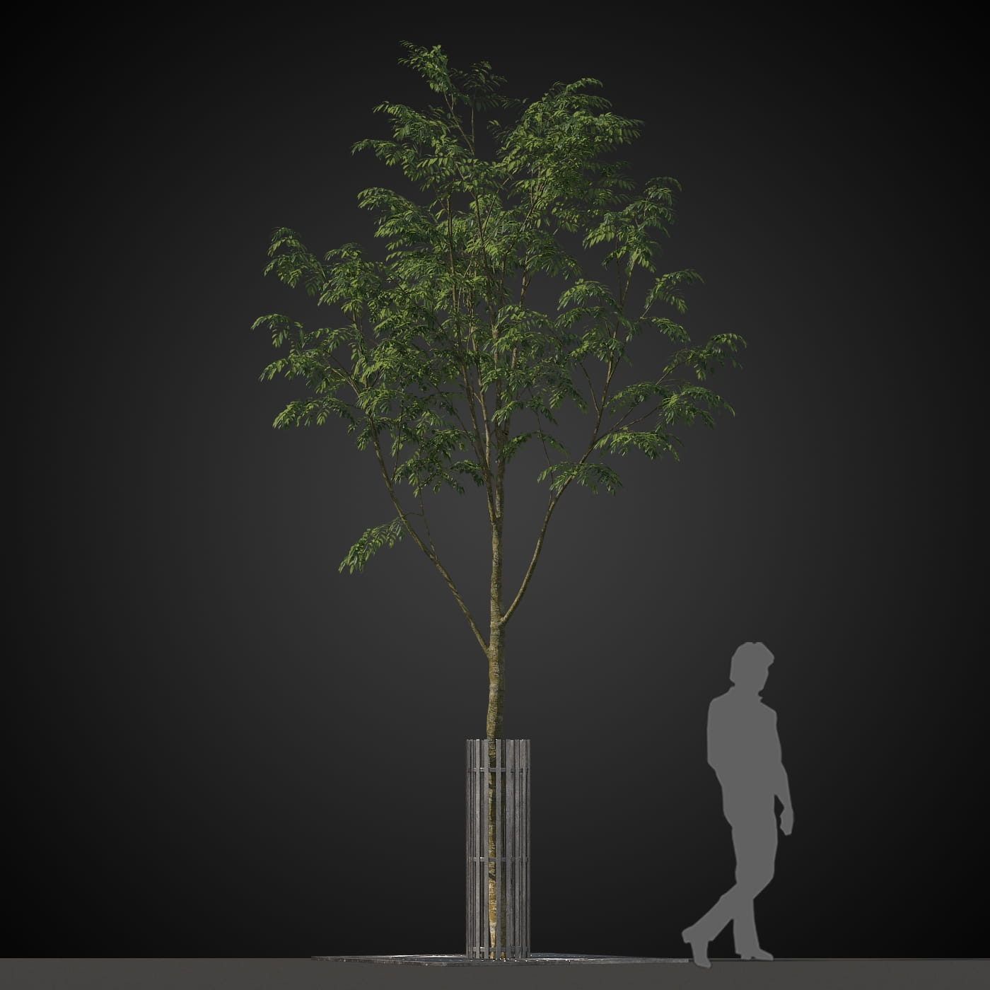 tree 34 AM207 Archmodels