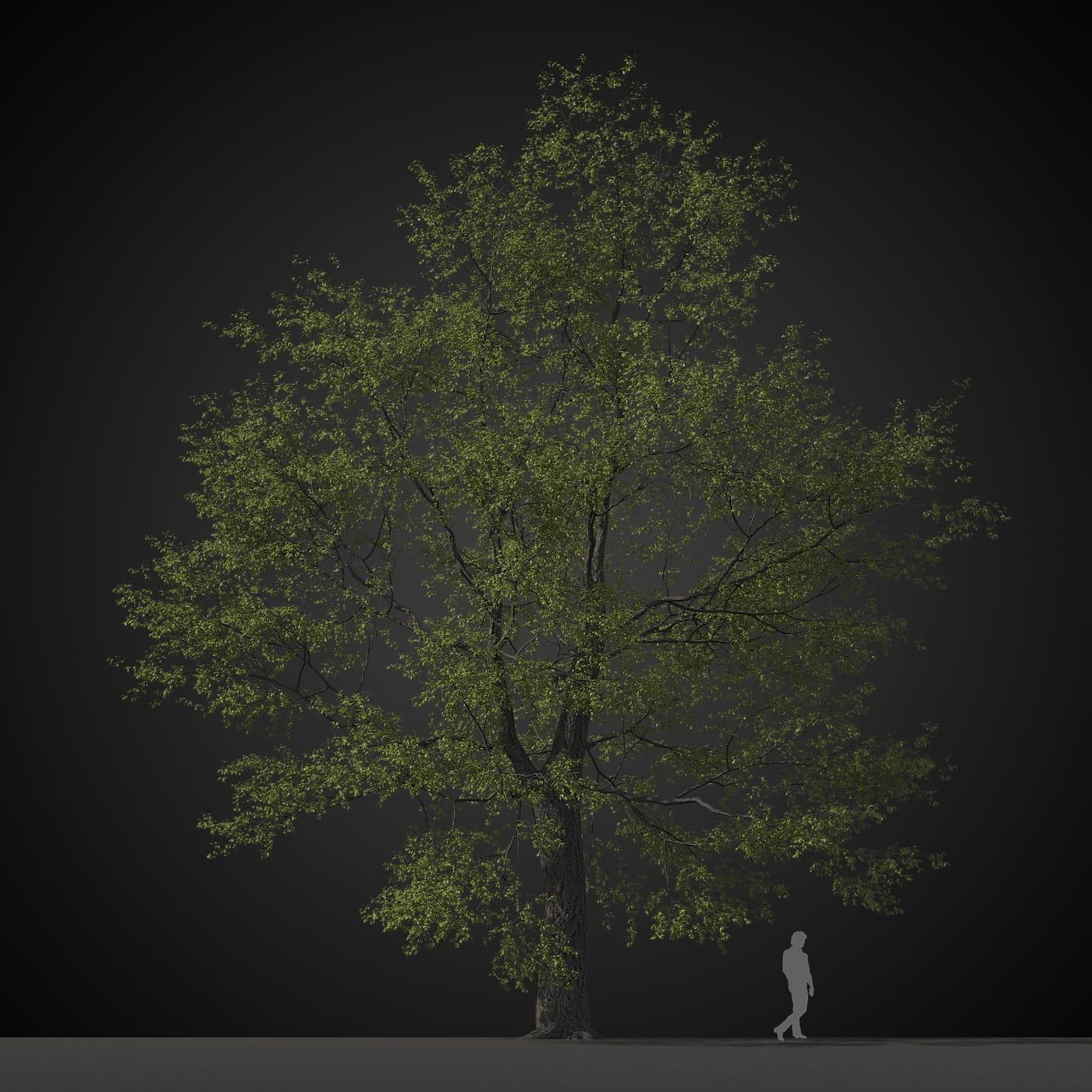 tree 36 AM207 Archmodels