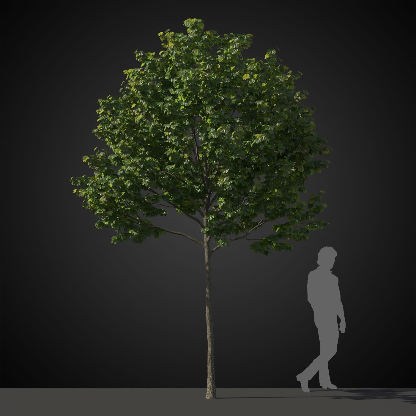 tree 38 AM207 Archmodels