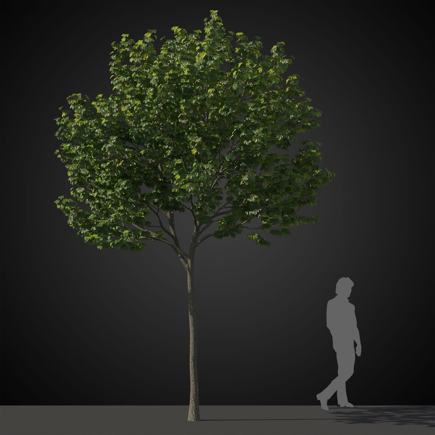 tree 39 AM207 Archmodels