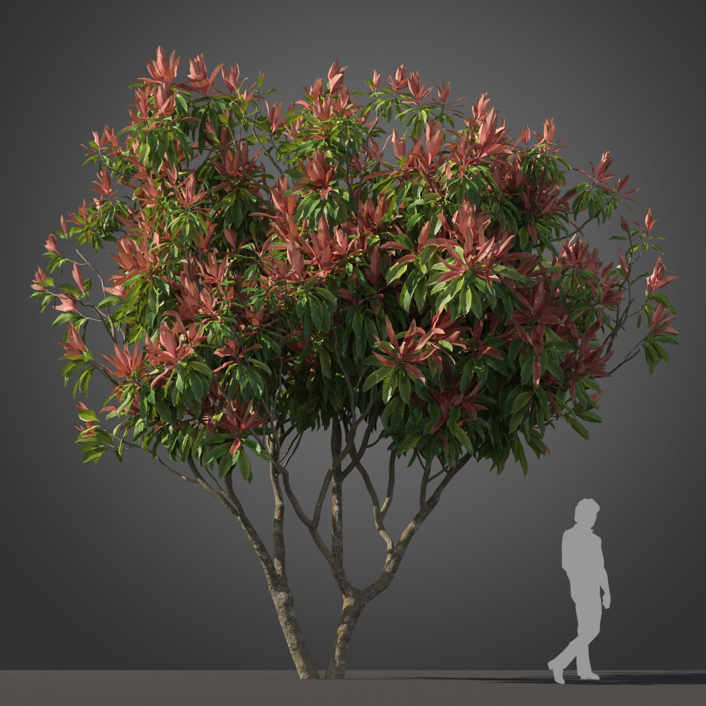 Loquat tree 2 AM210 Archmodels