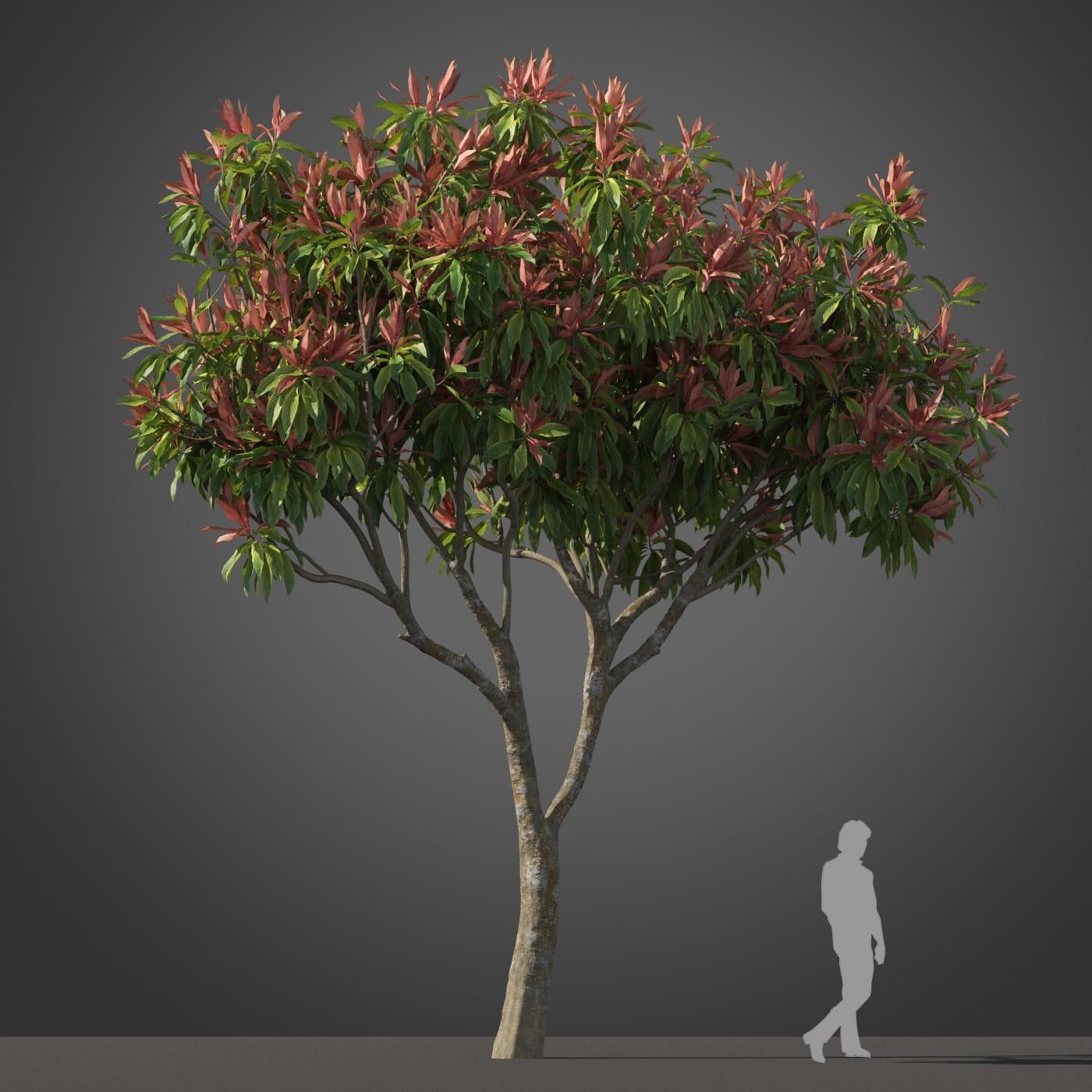 Loquat tree 3 AM210 Archmodels