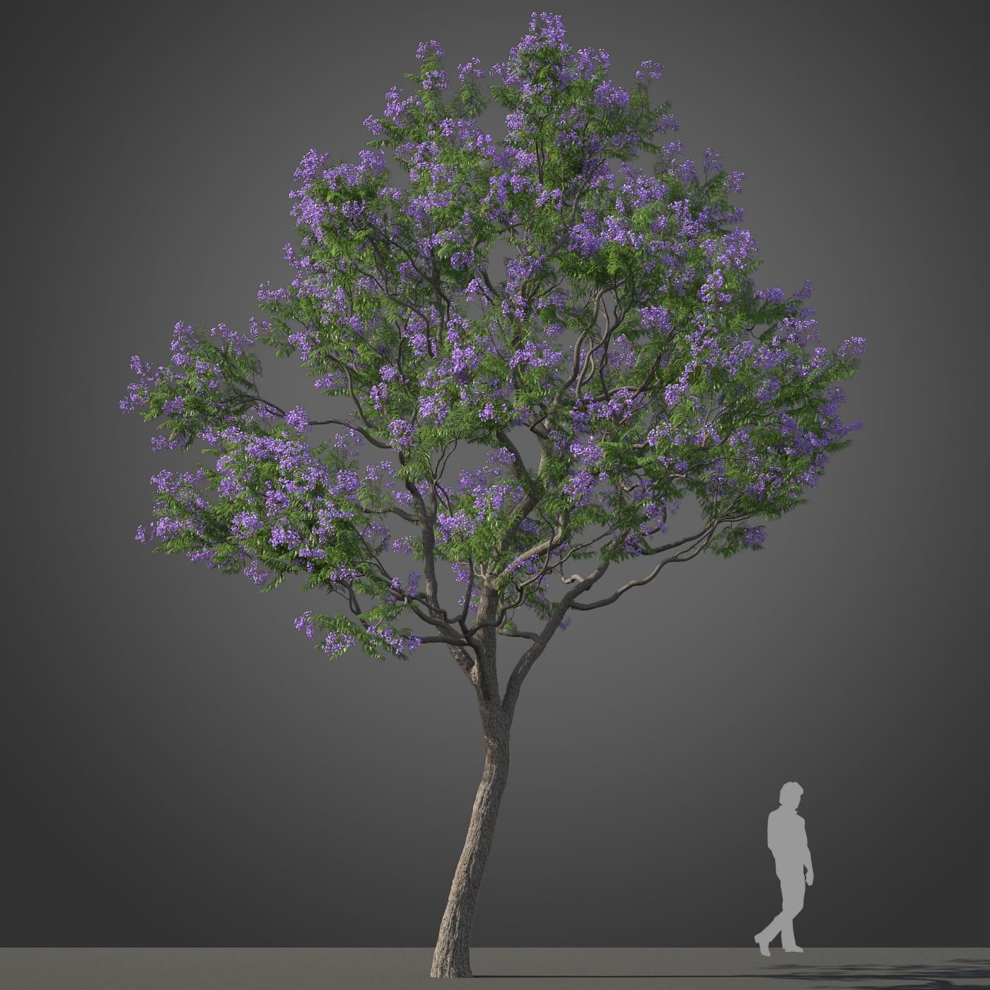 Jacaranda tree 15 AM210 Archmodels