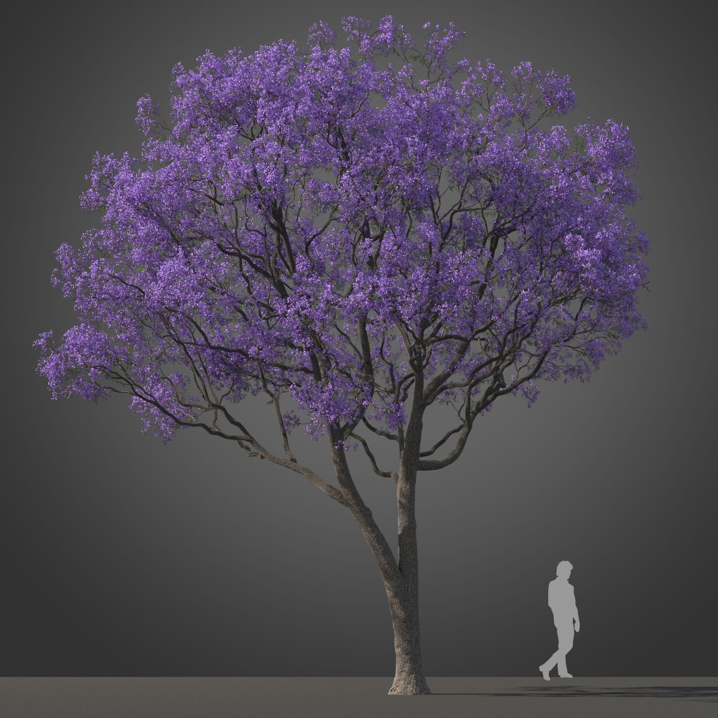Jacaranda tree 16 AM210 Archmodels