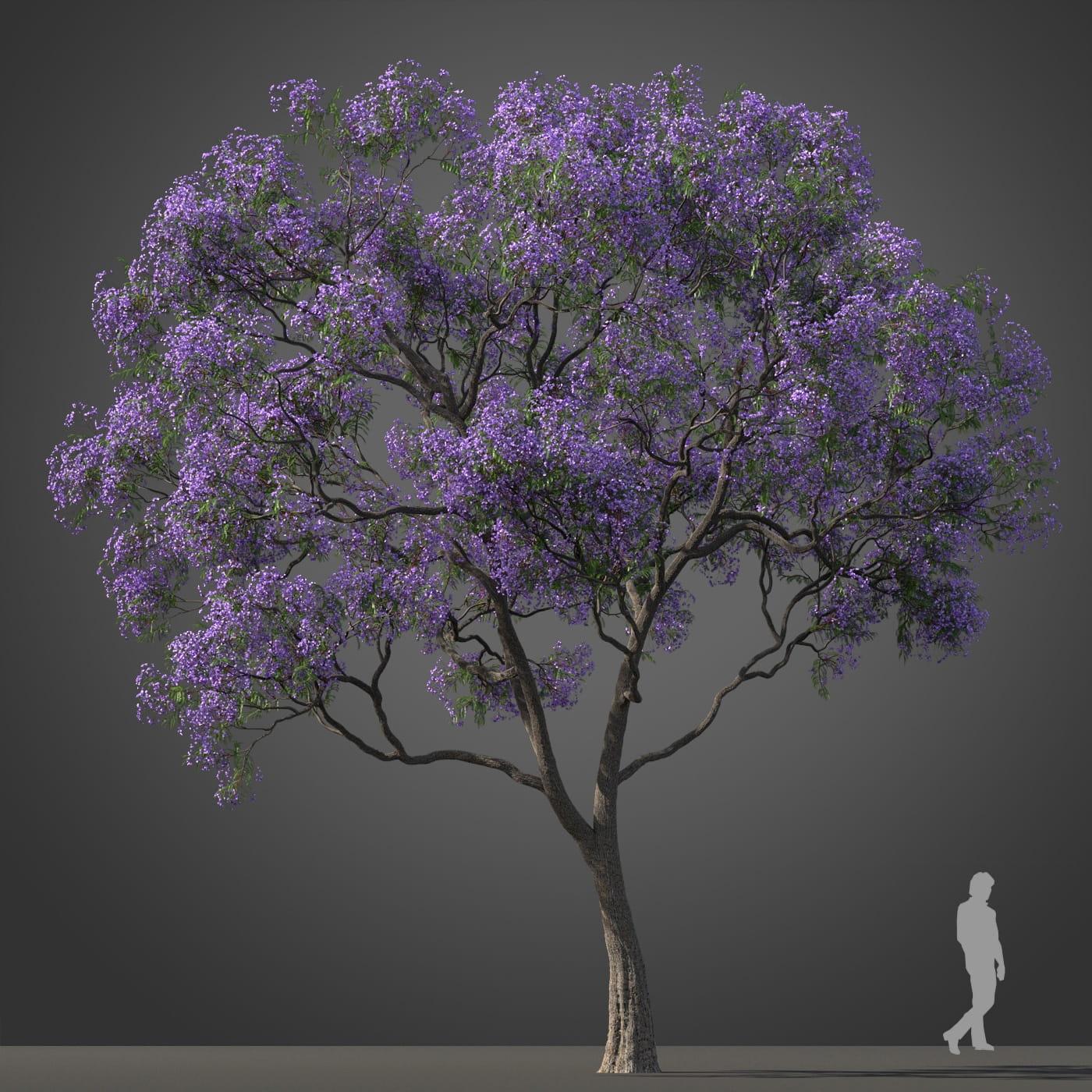 Jacaranda tree 17 AM210 Archmodels
