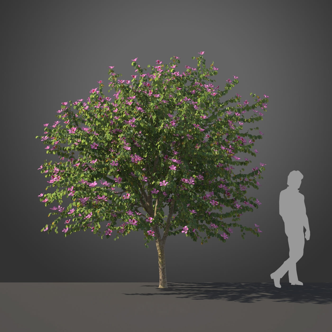 Bauhinia tree 23 AM210 Archmodels