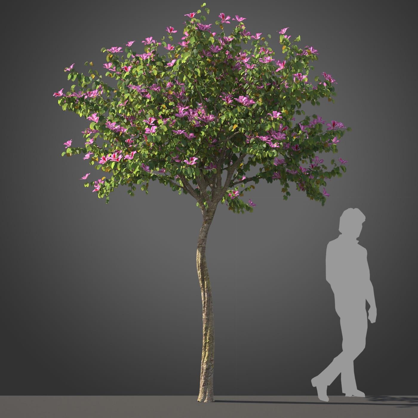 Bauhinia tree 24 AM210 Archmodels