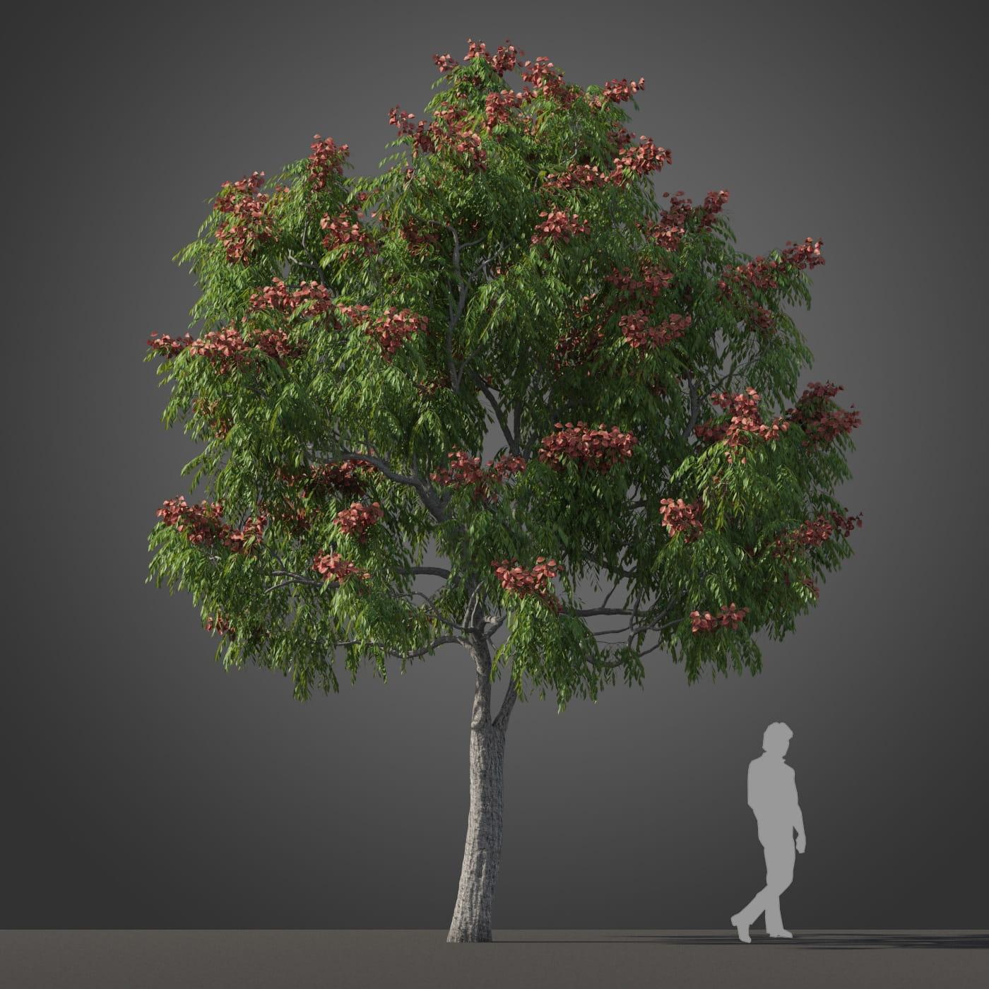 Koelreuteria bipinnata tree 35 AM210 Archmodels