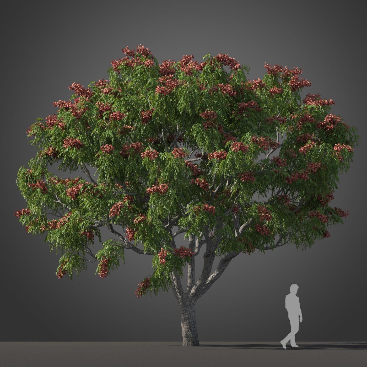 Koelreuteria bipinnata tree 36 AM210 Archmodels