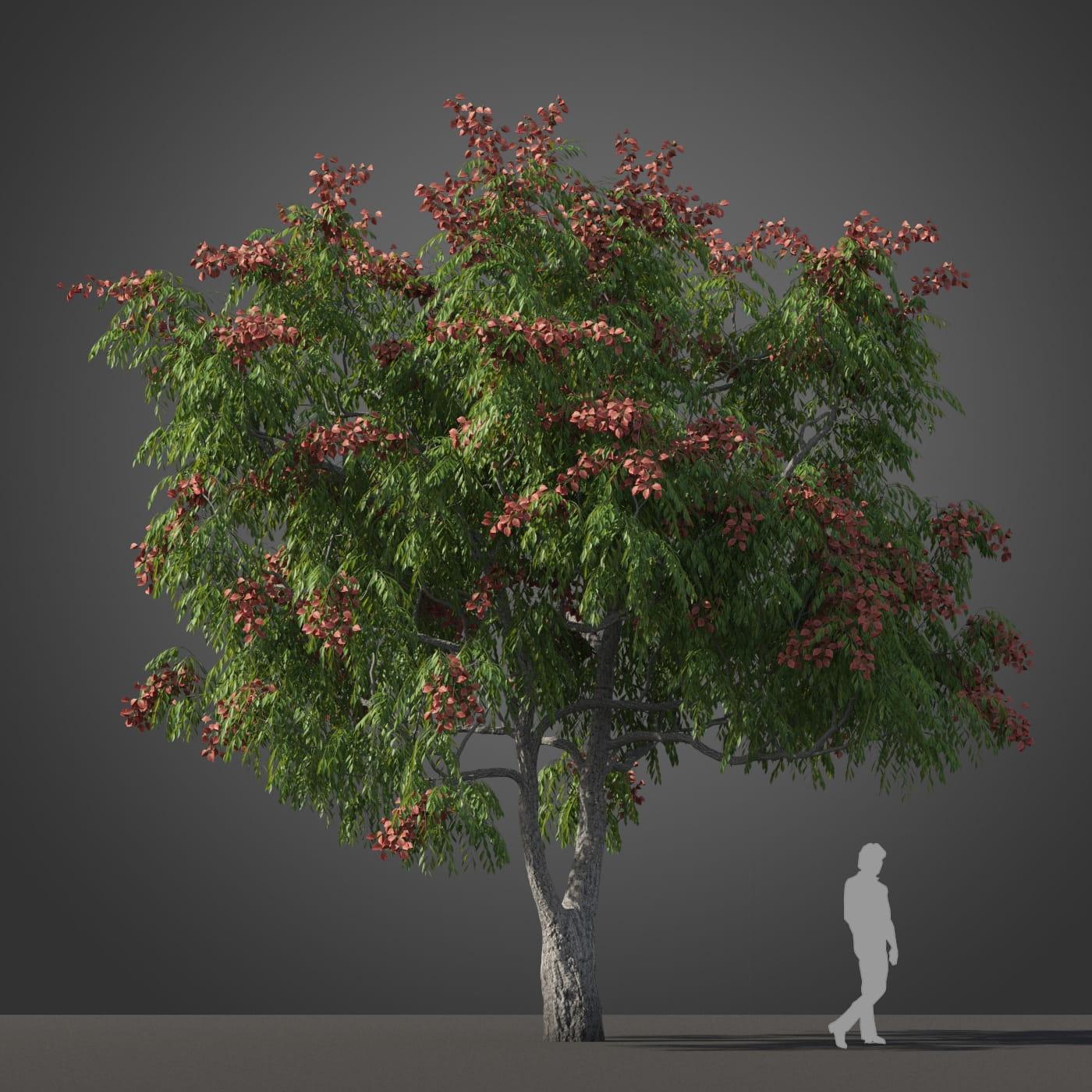 Koelreuteria bipinnata tree 37 AM210 Archmodels