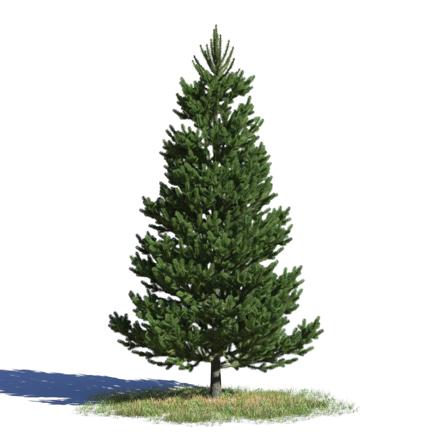 Picea abies 9 AM219 Archmodels