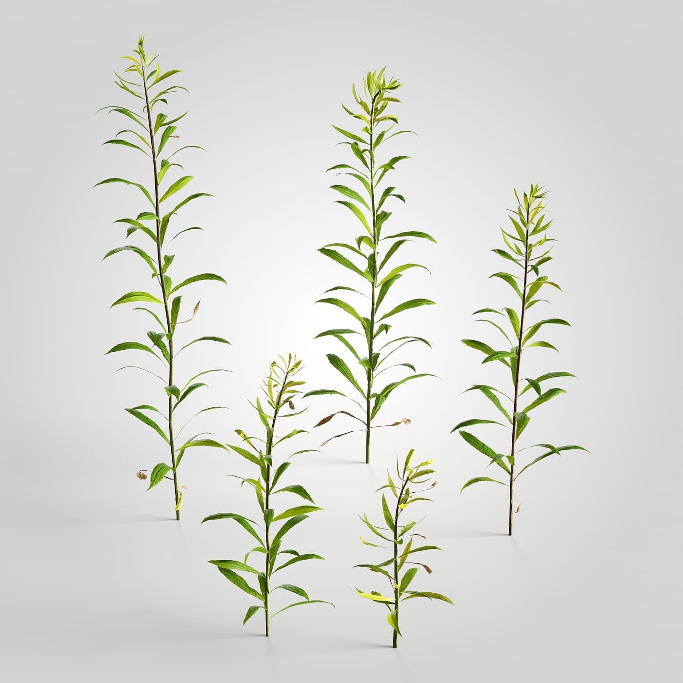 plant set 1 AM226 Archmodels