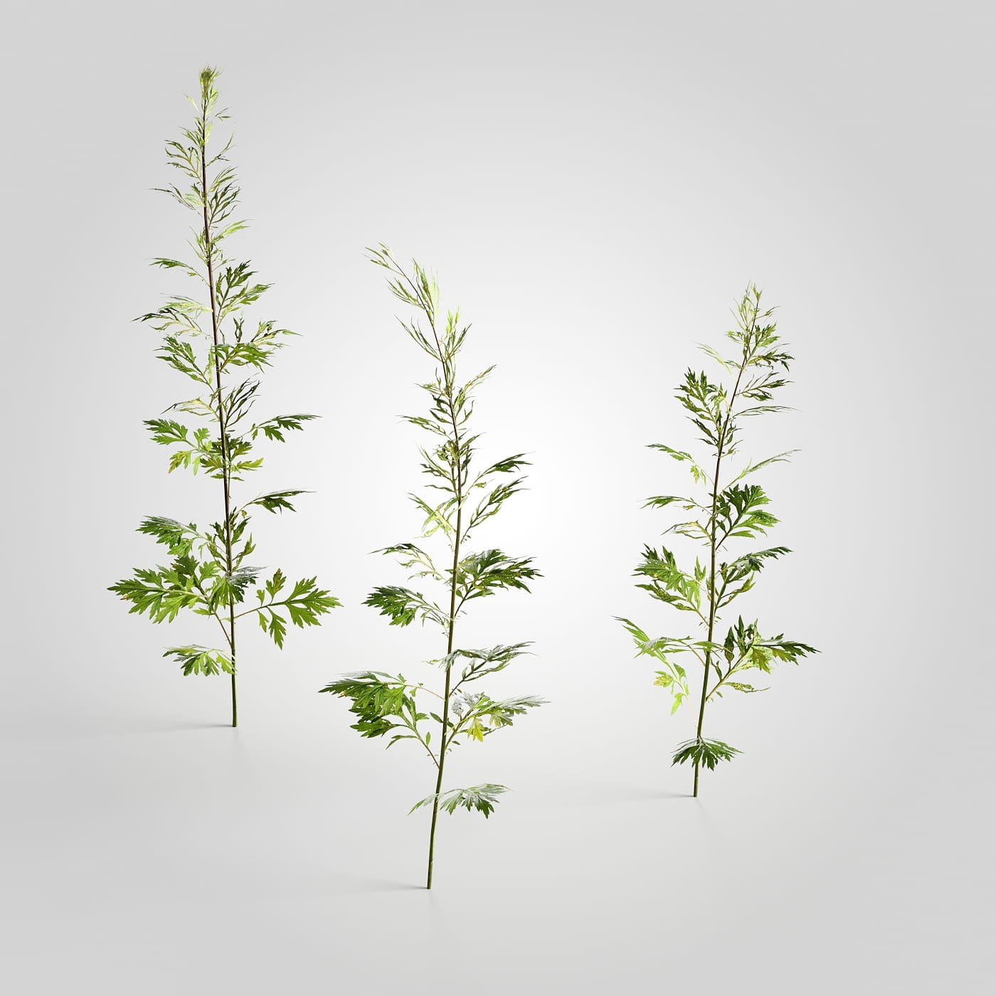 plant set 2 AM226 Archmodels