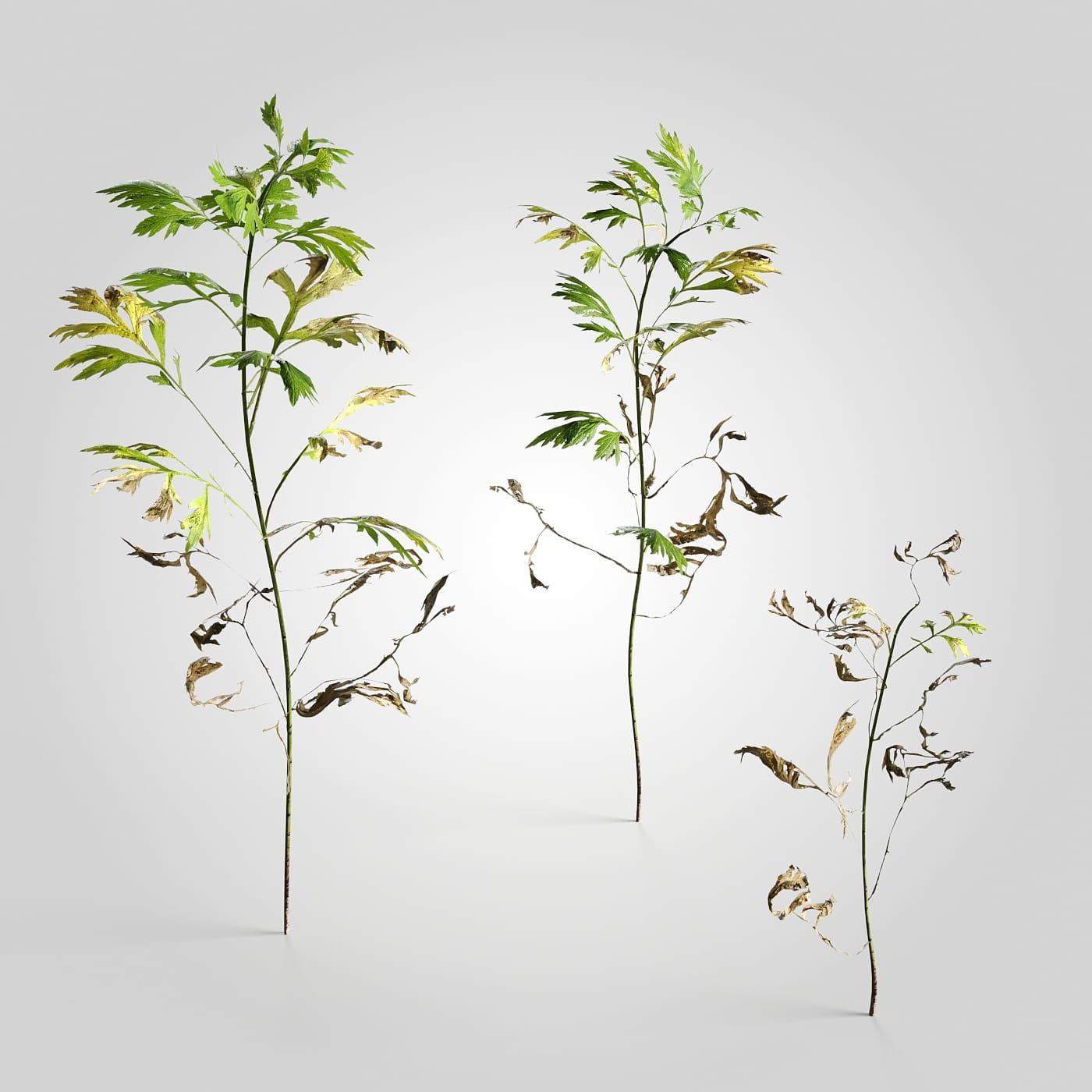 plant set 3 AM226 Archmodels