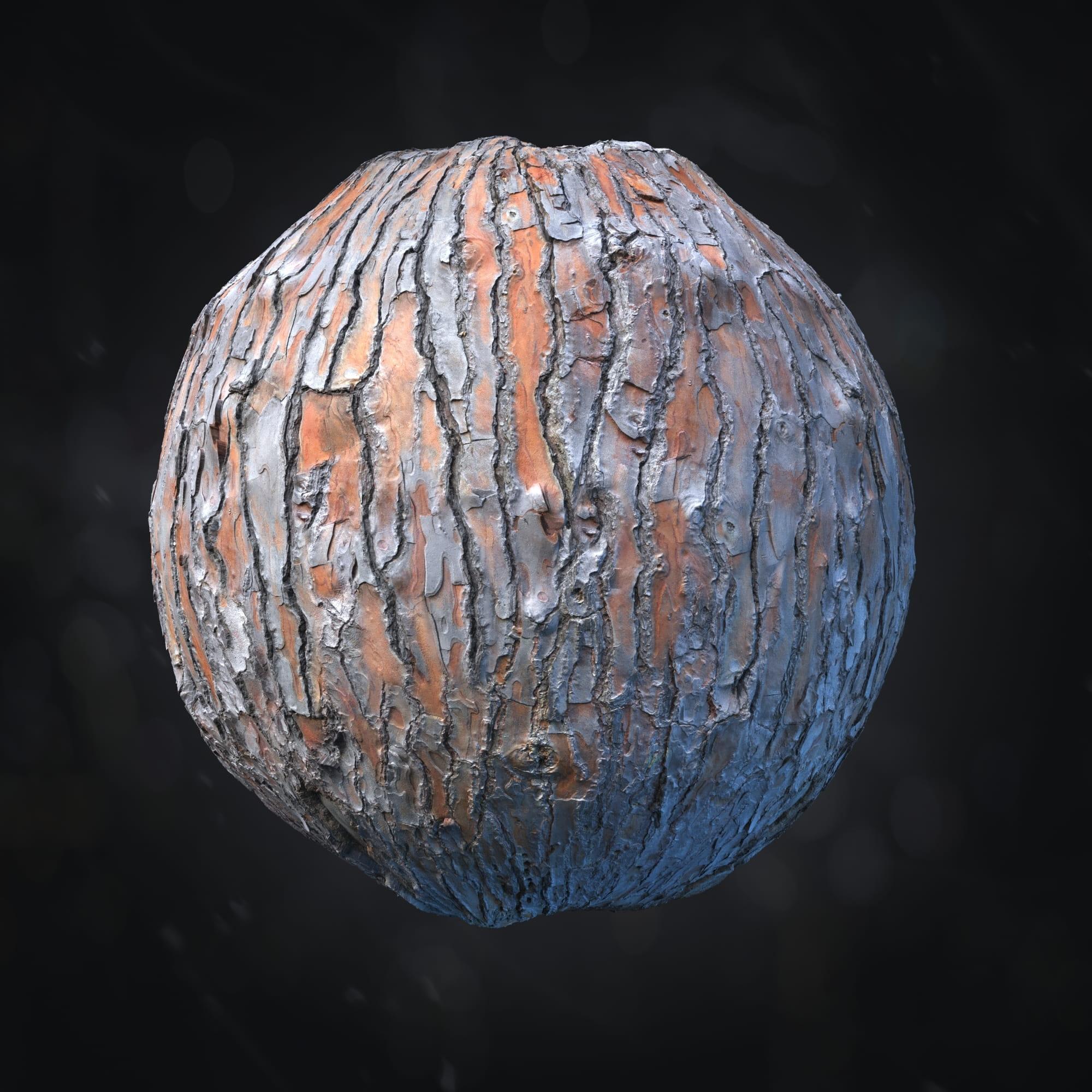 Pinus pinea bark 13 Archmaterials 1