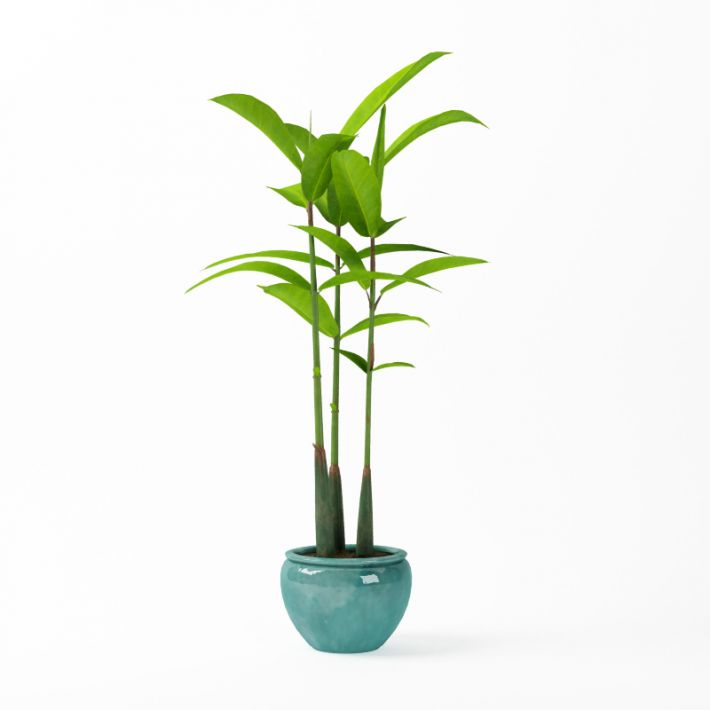 Plant 40 AM75 Archmodels