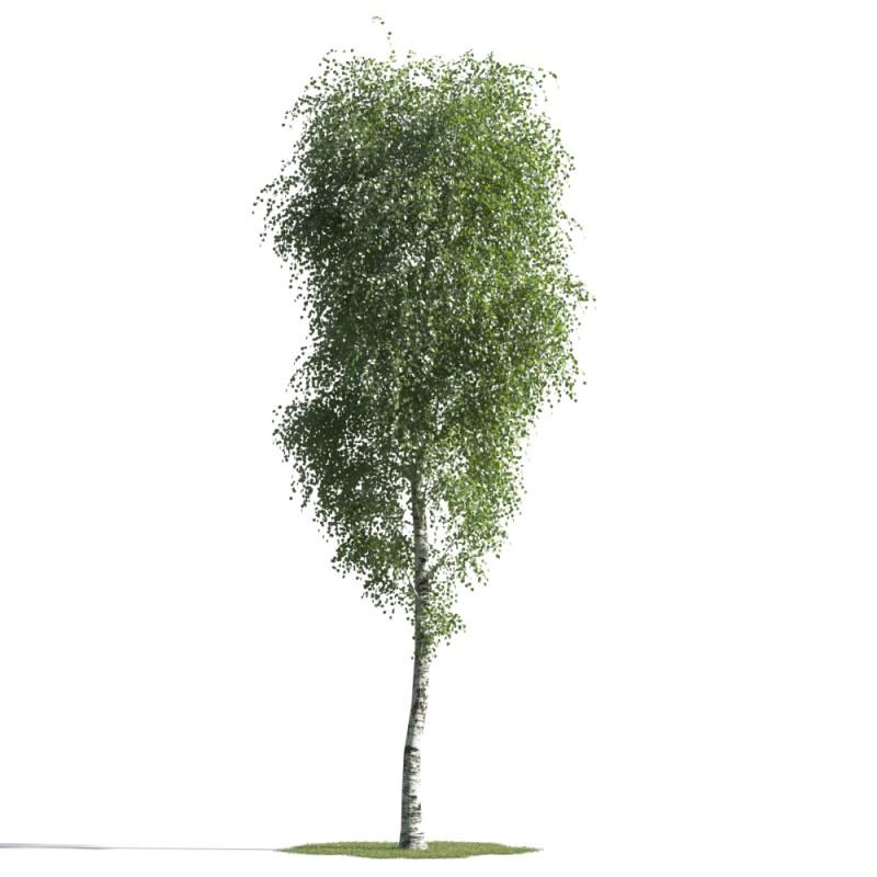 tree 41 AMC01