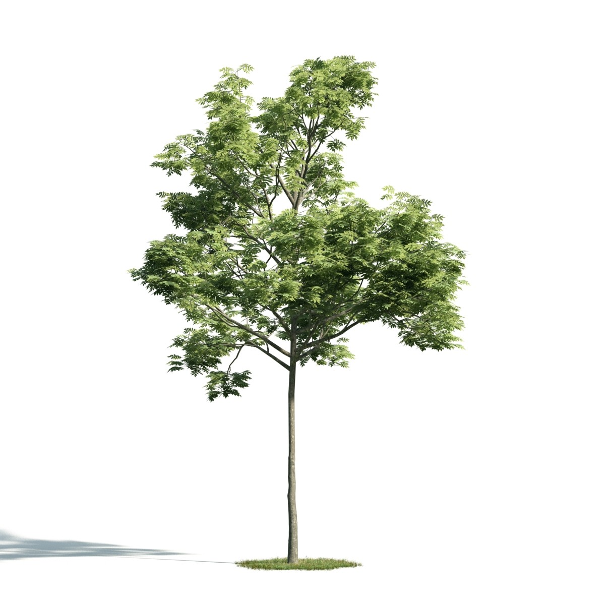 Tree 38 AM171 Archmodels