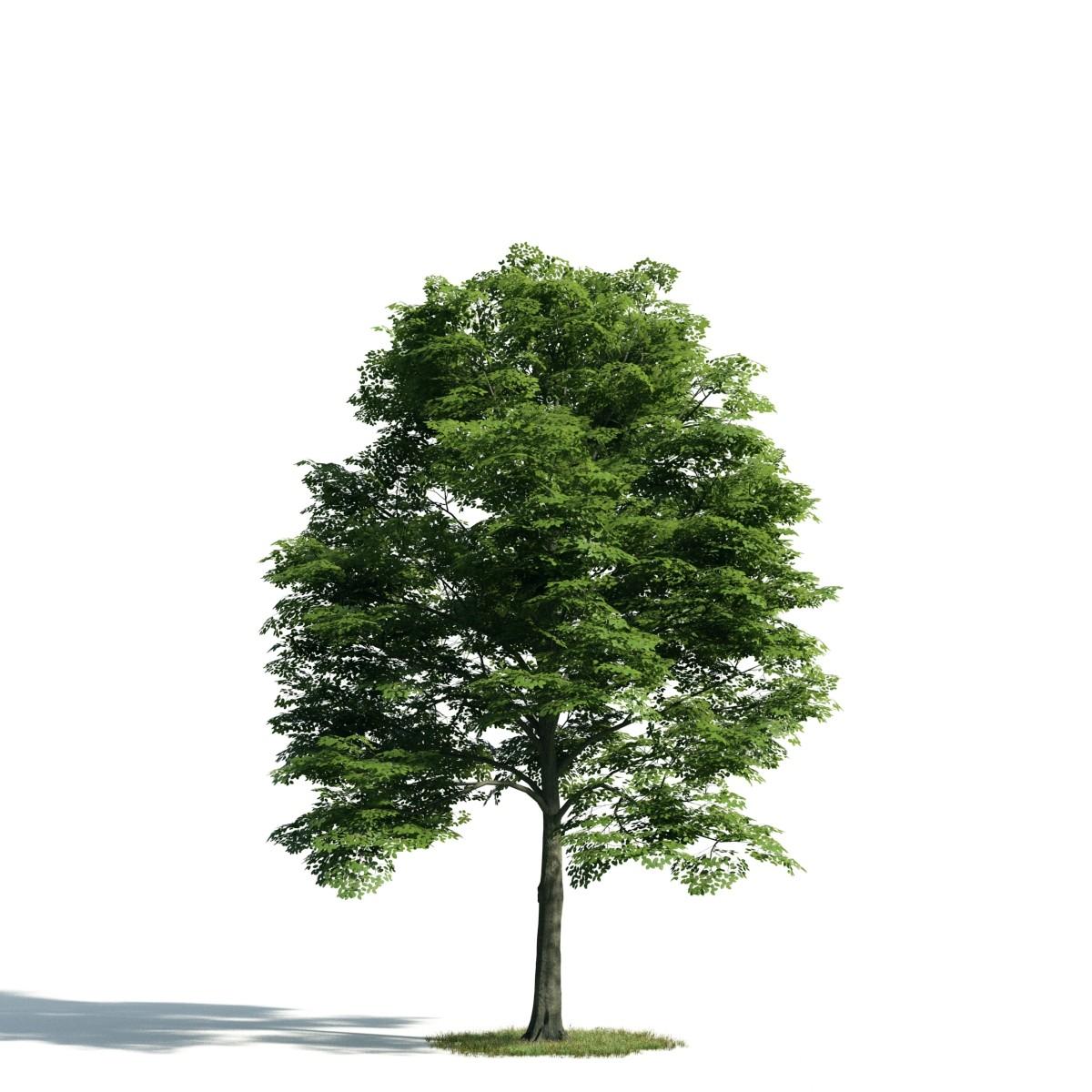 Tree 14 AM171 Archmodels