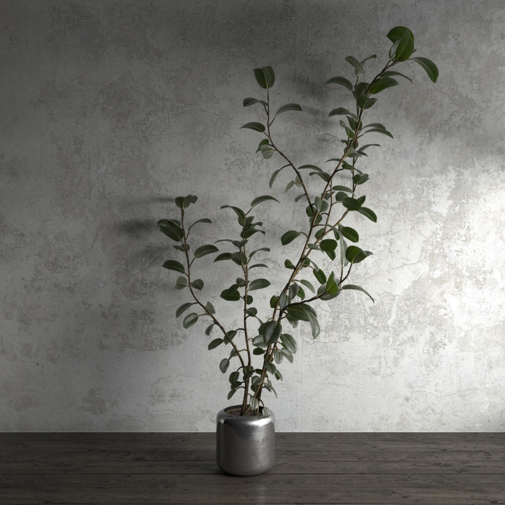 plant 50 am173