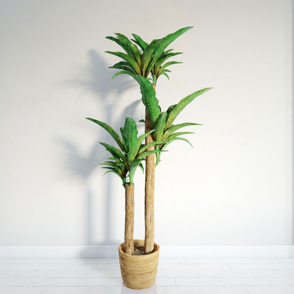 plant 11 AM141 Archmodels