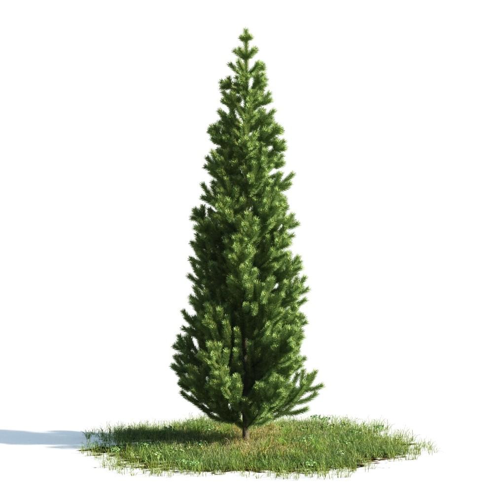 Tree 43 am176