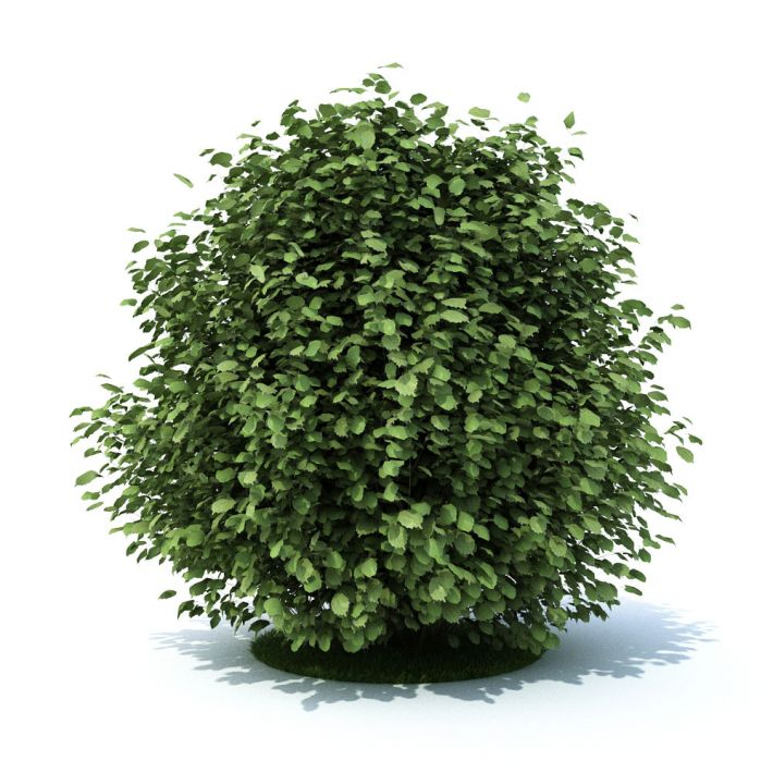 plant 20 AM105 Archmodels