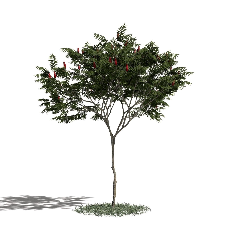 Tree 05 amb1