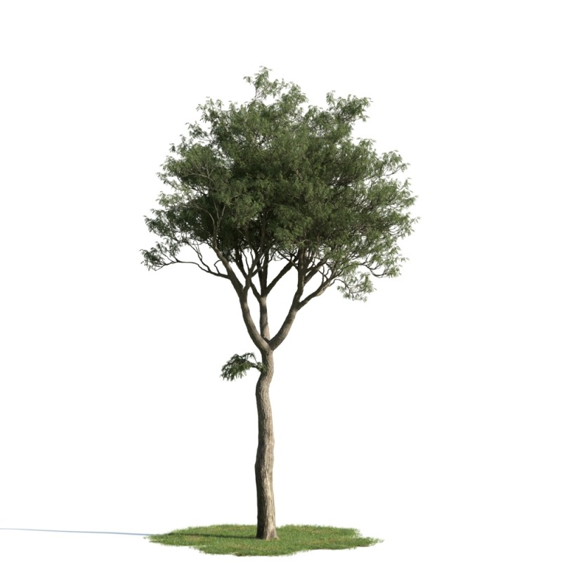 tree 48 am163