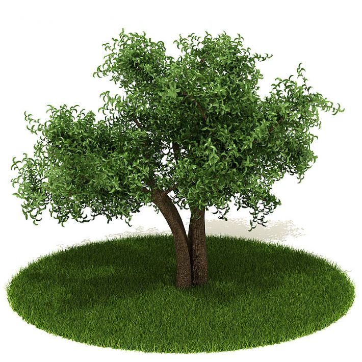 Plant 26 AM42 Archmodels