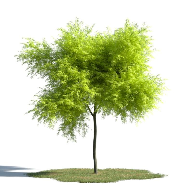 tree 100 AMC1