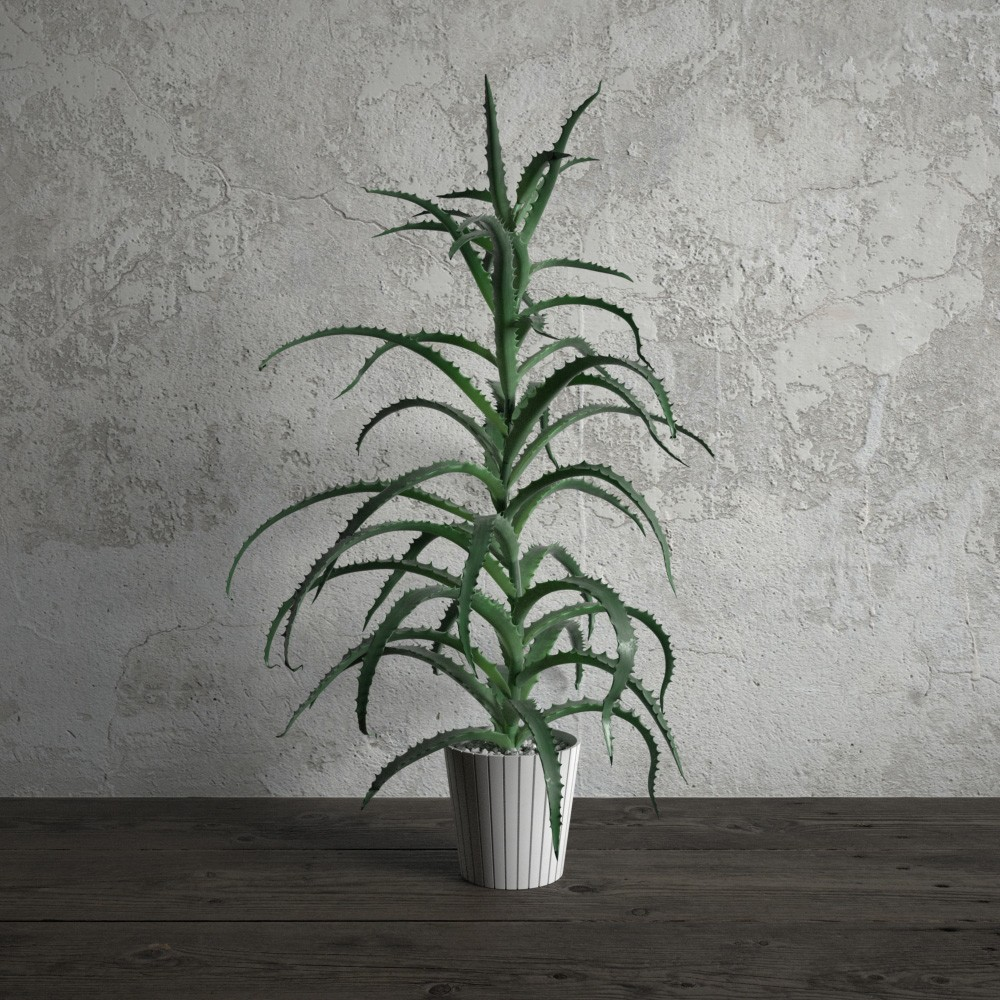 plant 14 am173