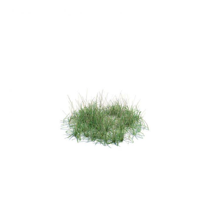 simple grass medium 134 AM124 Archmodels