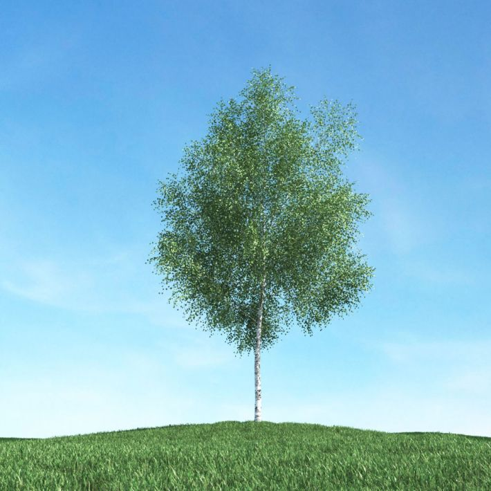 tree 5 AM106 Archmodels