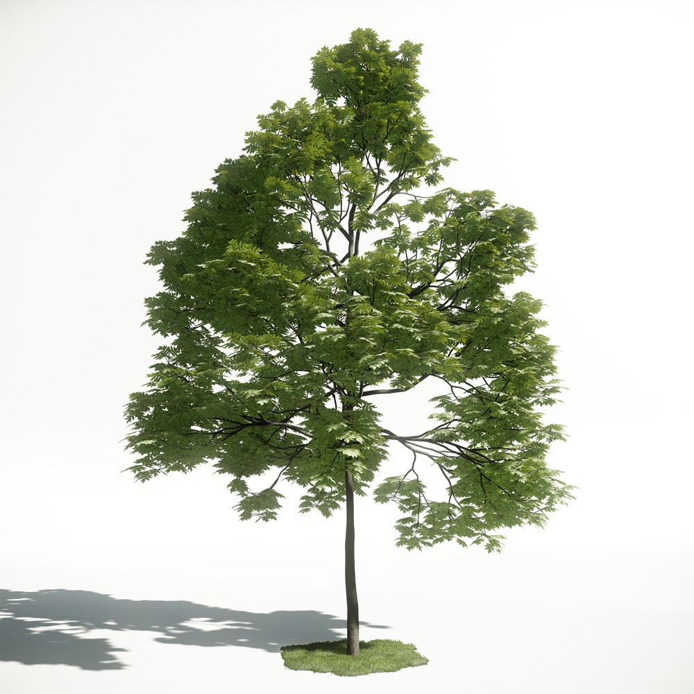 Tree 39 AM1 for CryEngine Archmodels