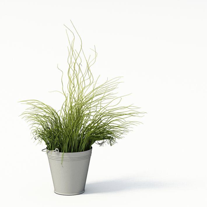 Plant 34 AM24 Archmodels