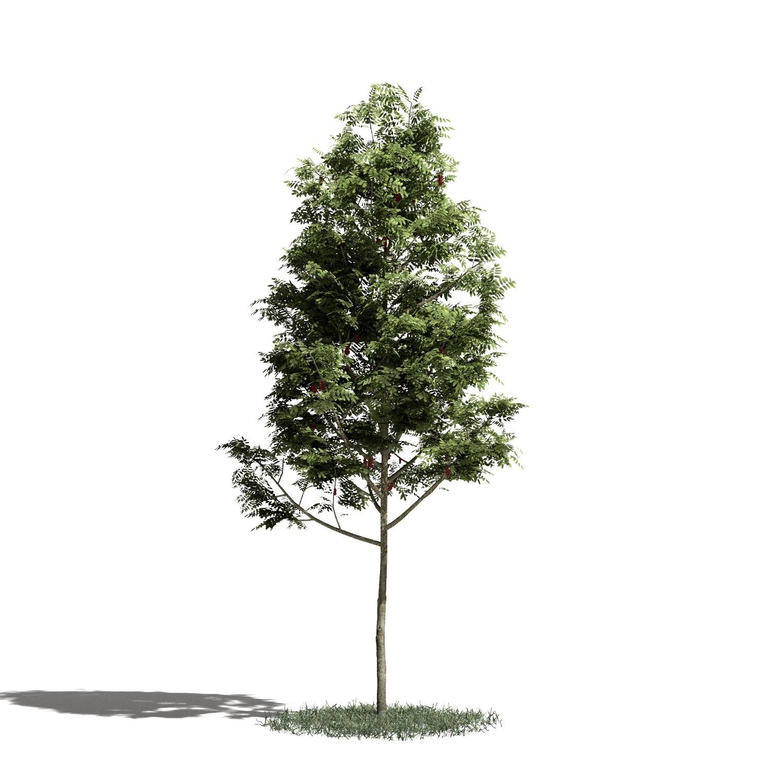 Tree 02 amb1