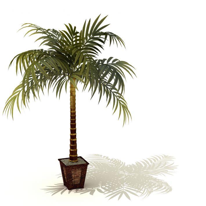 plant 09 AM41