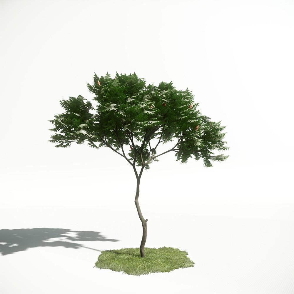 Tree 04 amce1