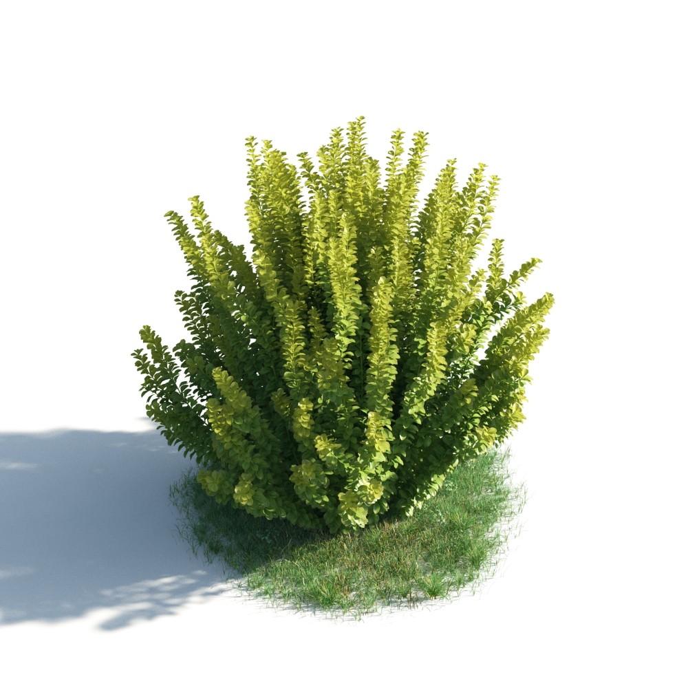 plant 48 AM183