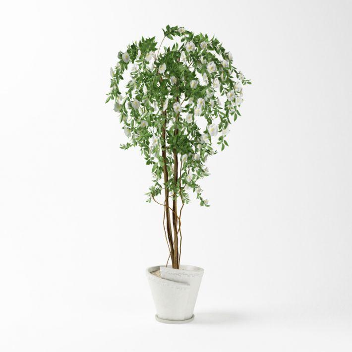 Plant 45 AM75 Archmodels