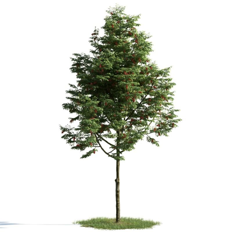 tree 2 AM163 Archmodels