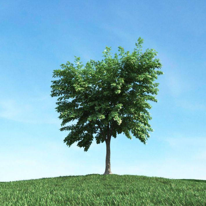 tree 38 AM106 Archmodels